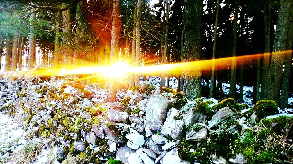 Sunray piercing through forest's trees