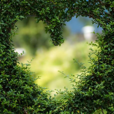 Anahata : Heart chakra, our love