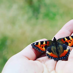 A symbol of transformation, beauty and growth a butterfly prepare to fly
