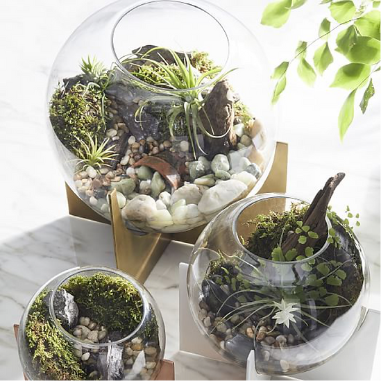 Things We Like Terrarium Diy Interior Design Company Seattle
