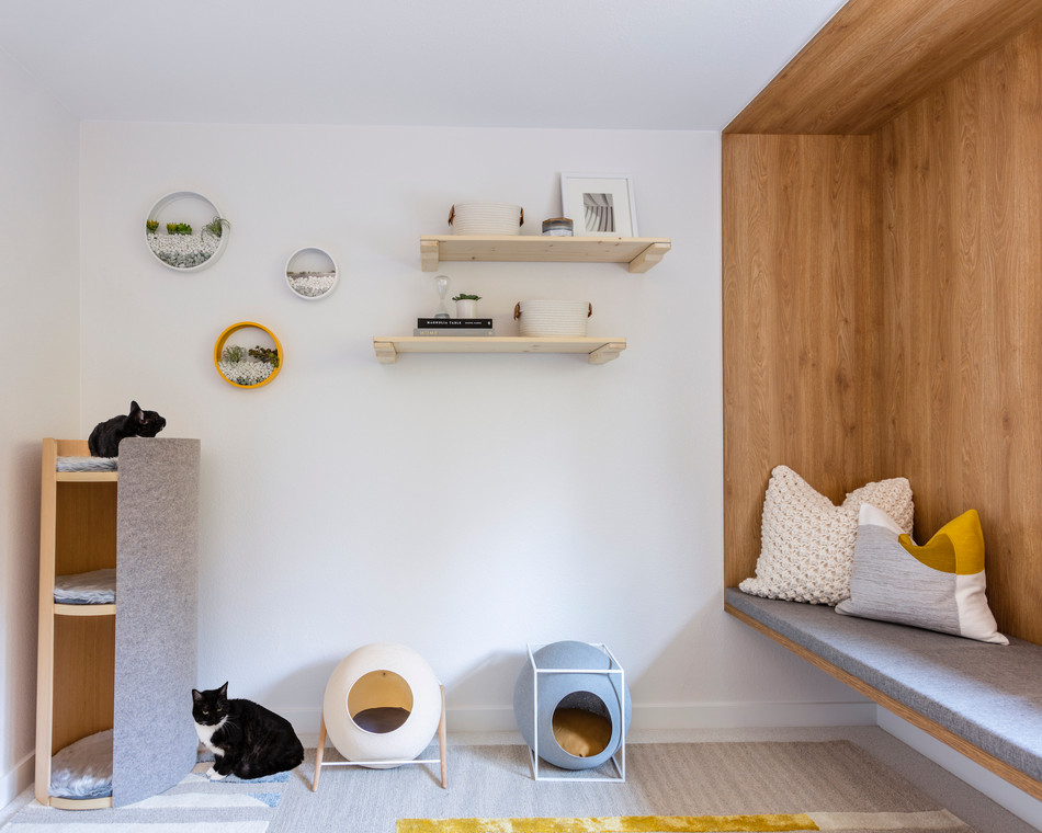 cat lounge interior design project
