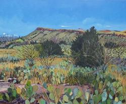Cactus Field- Dolores Mountain, 2013-2015