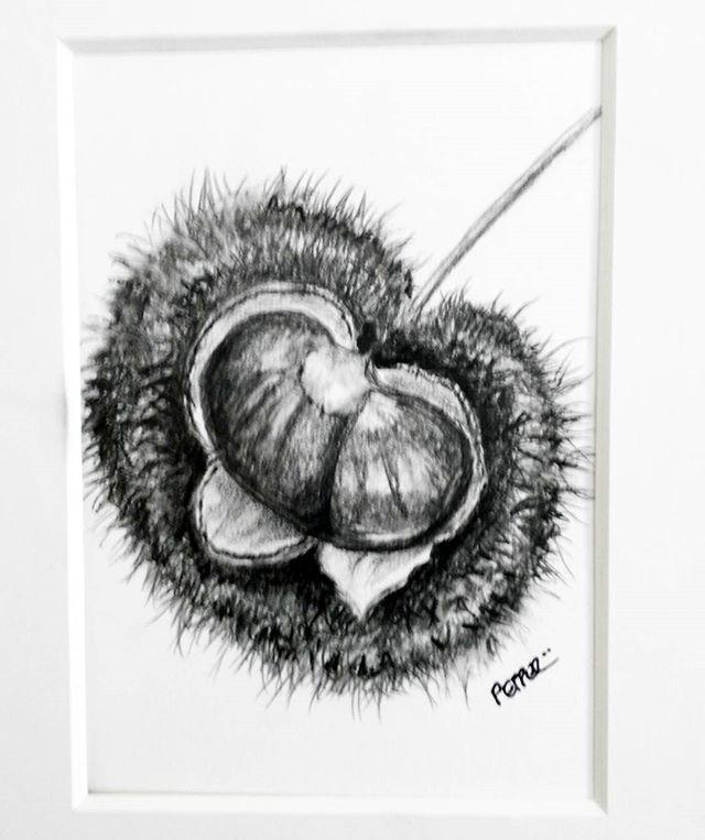 Chestnut sketch by Pepper Pepper