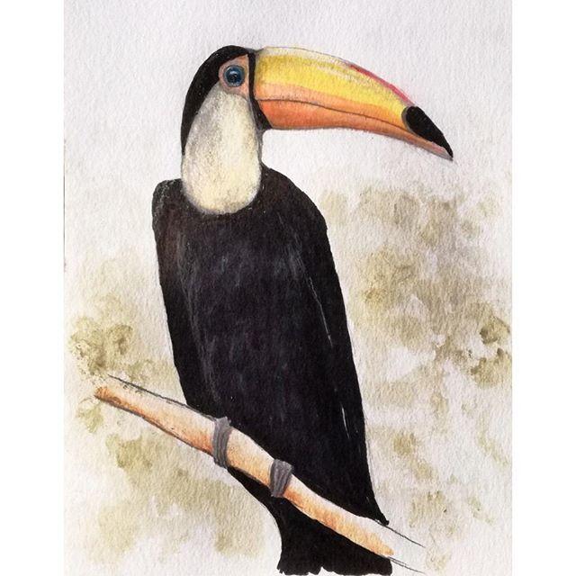 'Toucan'...pencil, ink..