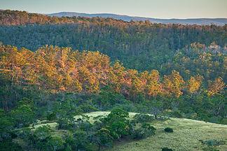 Credit_Andy Townsend_TLC_Kelvedon Estate Tasmania.jpg