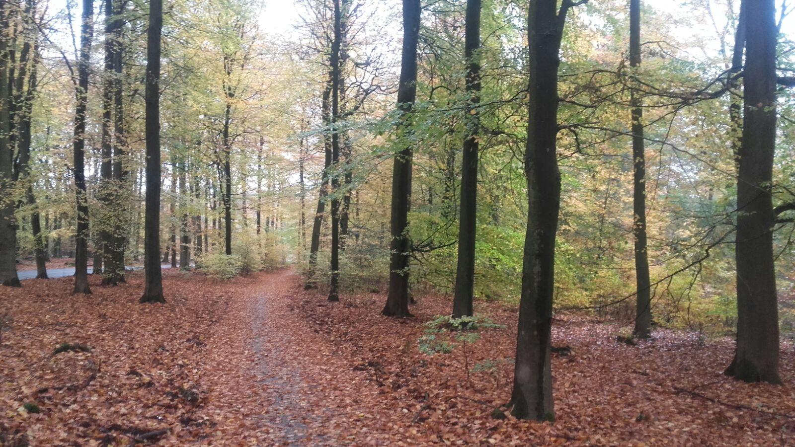 pad van gortel naar vierhouten