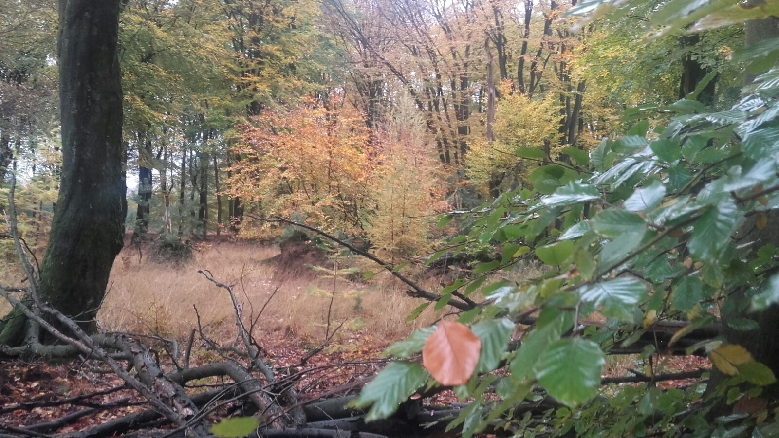 bos bij gortel