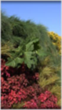 Instalación y diseño de muros verdes y jardines verticales, Proyectos de arquitectura y paisajismo suterntable y ecologico.