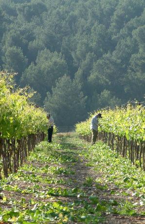winery-2.jpg