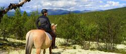 Horse riding Kvebergsøya fjord horse Norway