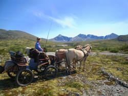 horse carriage driving Norway Kvebergsøya farmstay