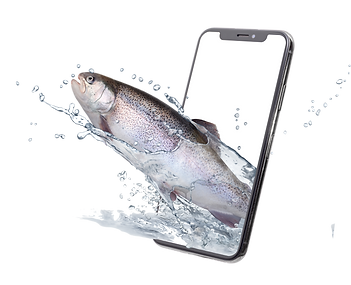iphone trout.png