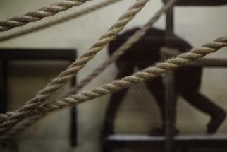 Chimp-Ropes1.jpg