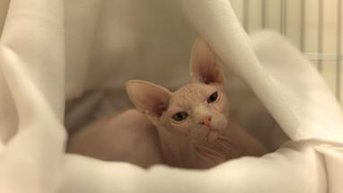 cat1-min.jpg