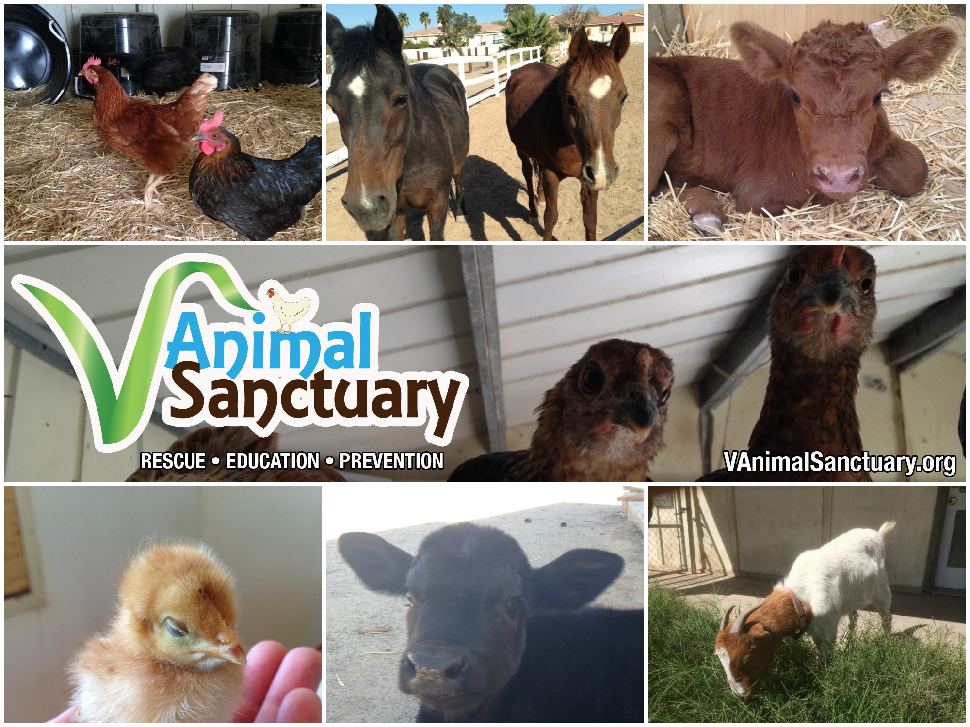 V Animal Sanctuary