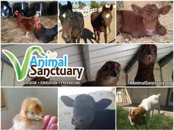V Animal Sanctuary