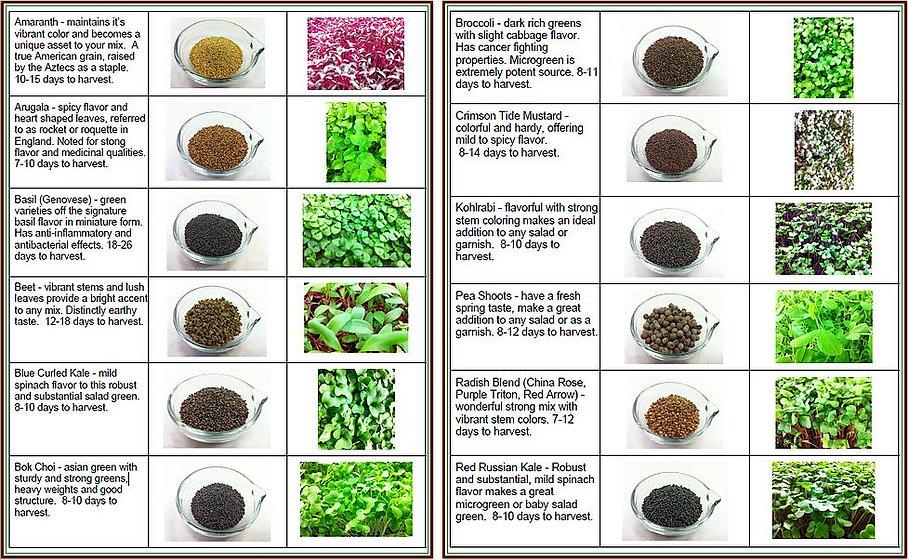 Descriptions of popular microgreens