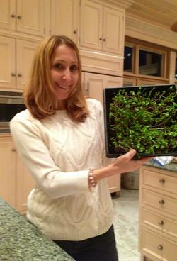 Microgreens grown at home