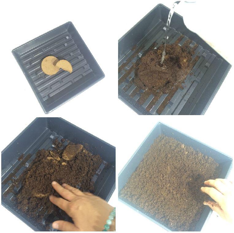 soil progression.JPG