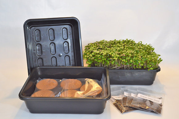 STARTER HOME GROWING KIT - HIGH NUTRITION SEED SET