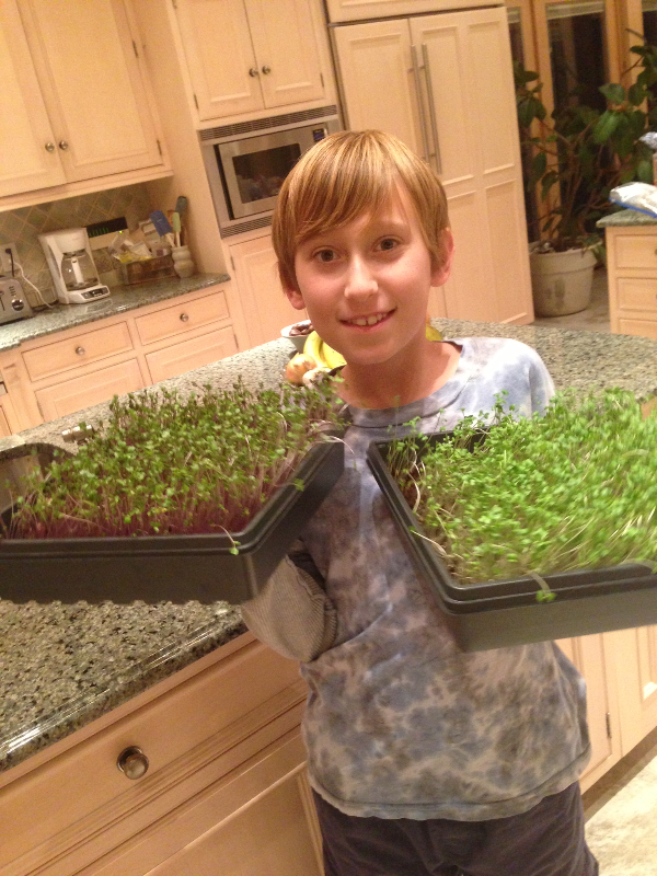 Grow your own microgreens at home