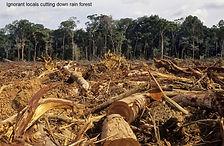 deforest3.jpg