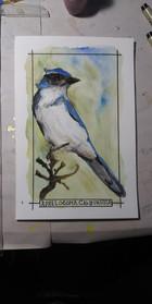 Birds from AZ
