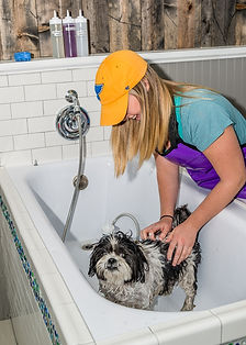 dog grooming chesterfield