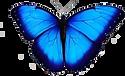 borboleta azul png.png