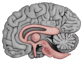 Eye of Horus - Brain.png