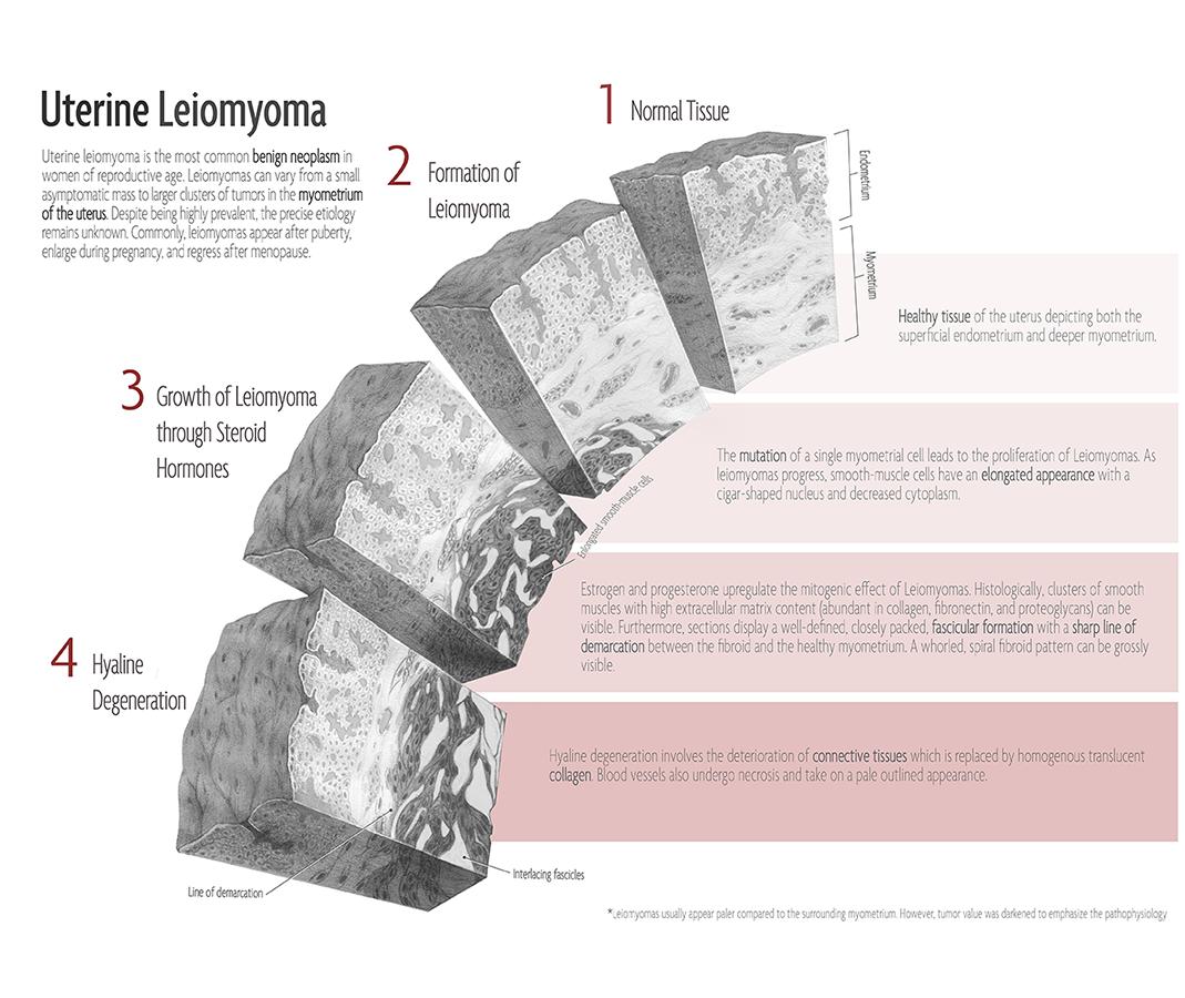 Tissue Cube Studies