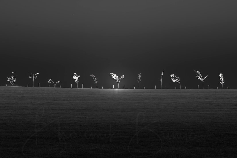 Rise & shine - National Arboretum Canberra - B&W collection