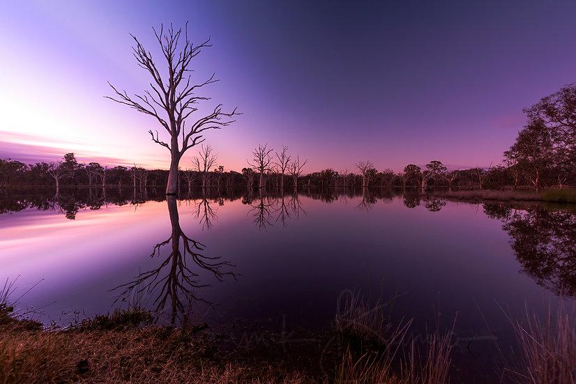 Soft Colors - Mulligan flats wetland Canberra