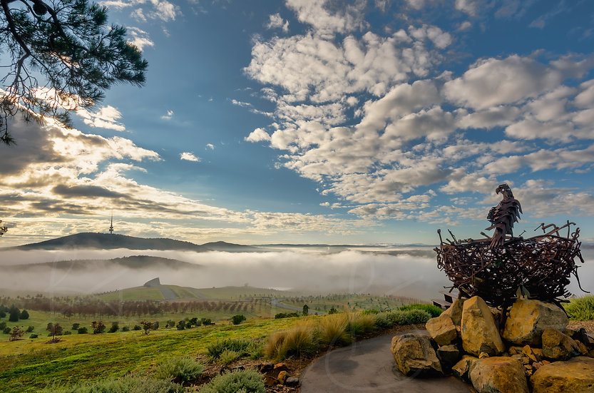 Fog in the city - National Arboretum Canberra