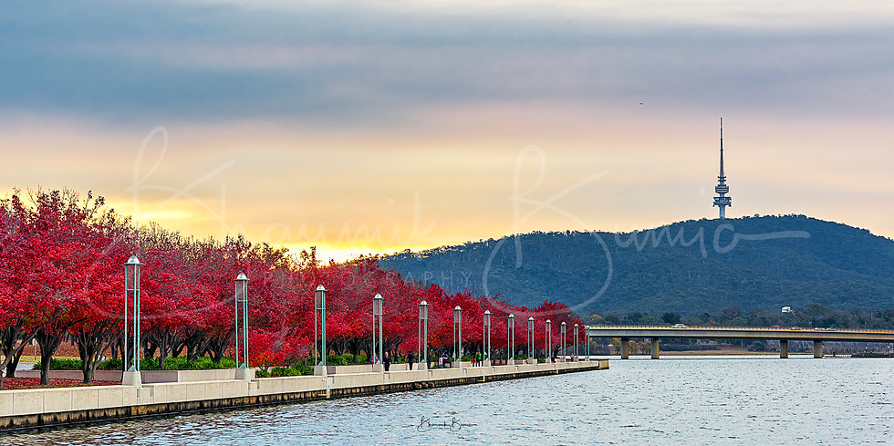 The Autumnish feel - Lake Burley Griffin - Panoramic