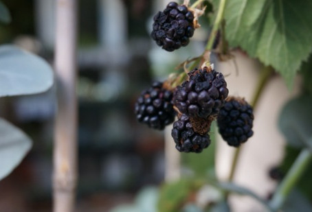 お店の果物たち
