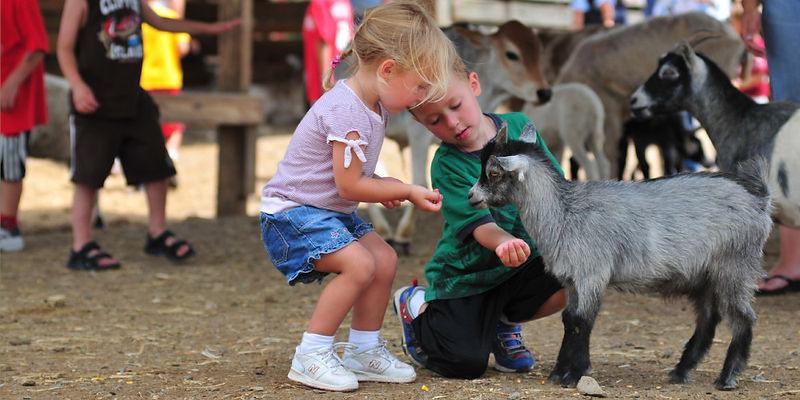 Petting Zoo.jpg