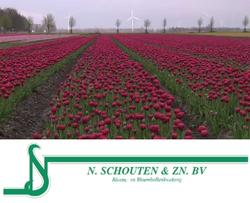 N. Schouten en Zn. B.V.