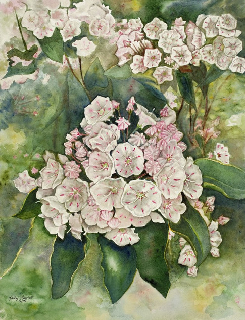 """Mountain Laurel"" by Kathy Garriott"