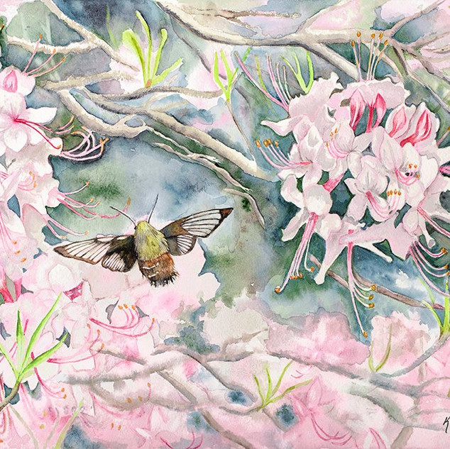 """Flying Lobster/Wild Pink Azalea"" by Kathy Garriott"