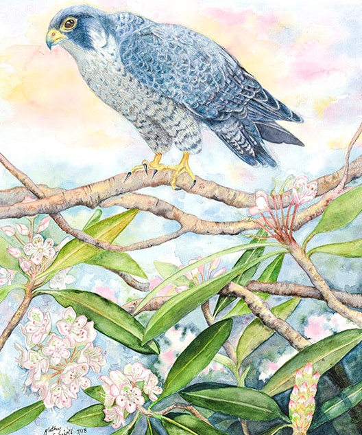 """Rhododendron and Peregrine Falcon"" by Kathy Garriott"