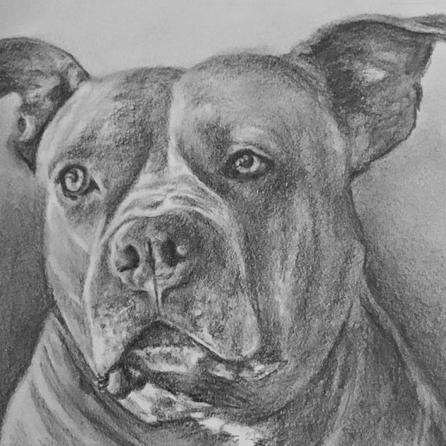 Your Pet's Pencil Portrait by Ashley Brickner