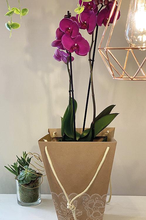 Orchidée fuchsia deux lampes