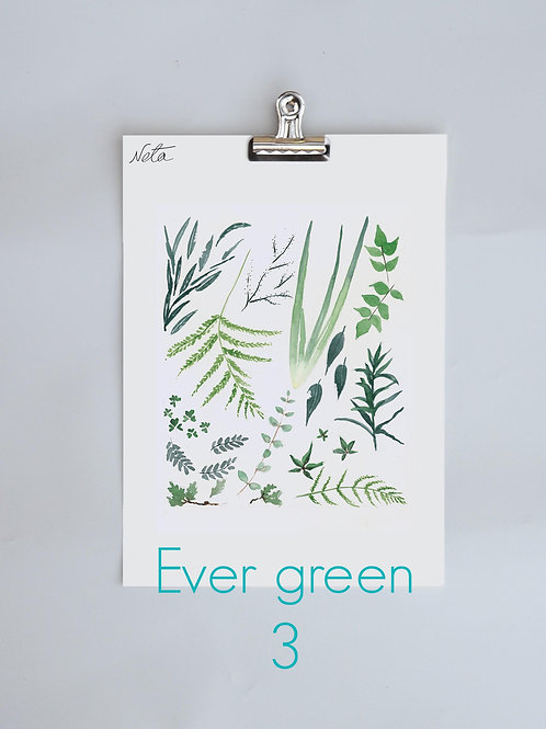Ever Green 3
