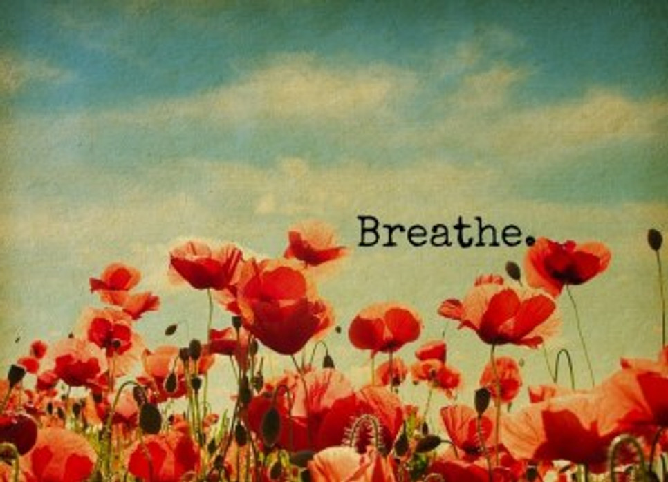 breathe poppies