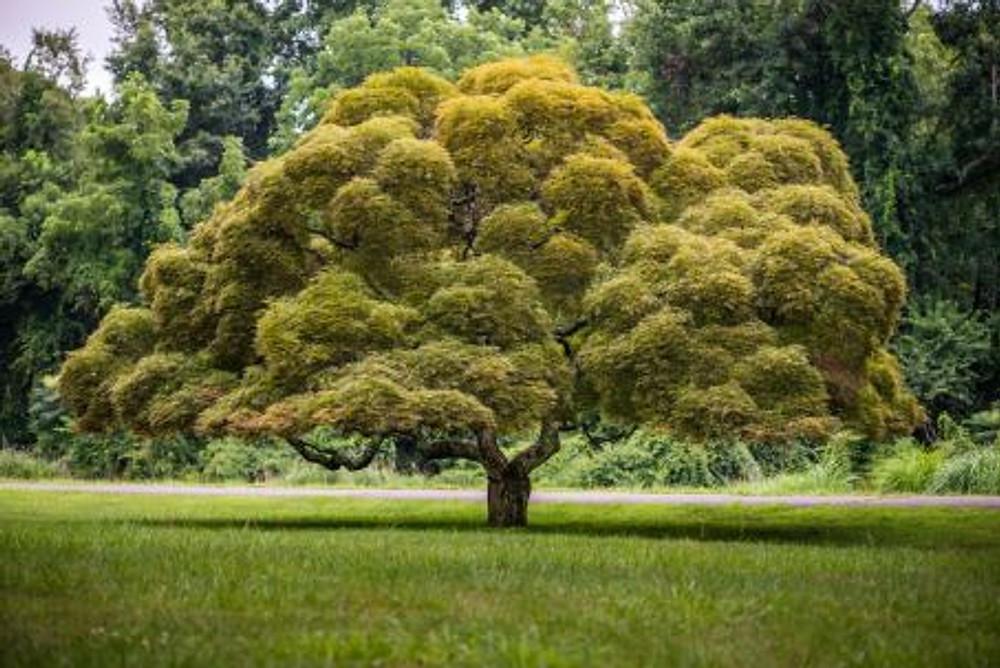 abundant-tree