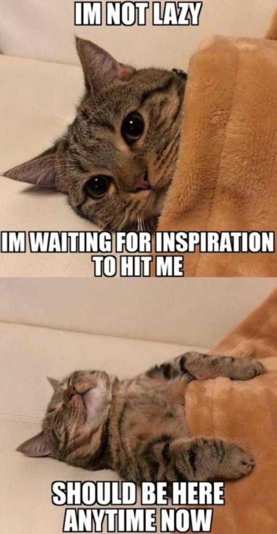 excuses cat