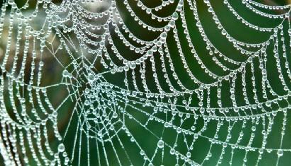 spider-web-droplets_1600.jpg
