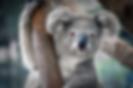 Screen Shot 2020-04-12 at 10.31.49 pm.pn