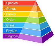 taxonomy_pyramid.jpg